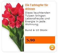 Tulpen vom Migros